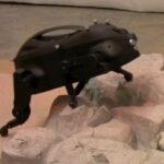 Perros robot (videos)