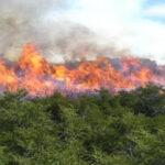 Bolivia en estado de emergencia por incendios