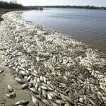Peces y aves están muriendo en el mundo ¿Qué ocurre?