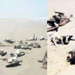 Perú en alerta tras muerte de peces y aves
