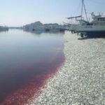 Toneladas de sardinas mueren en Japón