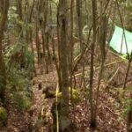 El bosque suicida en Japón Aokigahara