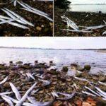 Cientos de peces inusuales mueren en Croacia