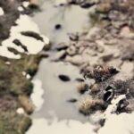 Tormenta inusual en EE.UU. mata miles de vacas