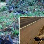 En Australia calor mata a miles de animales