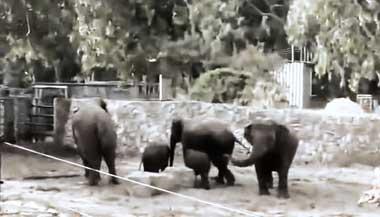 Israel elefantes se asustan