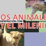 Los animales en el Milenio
